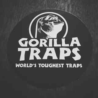 Gorilla Kopie-2